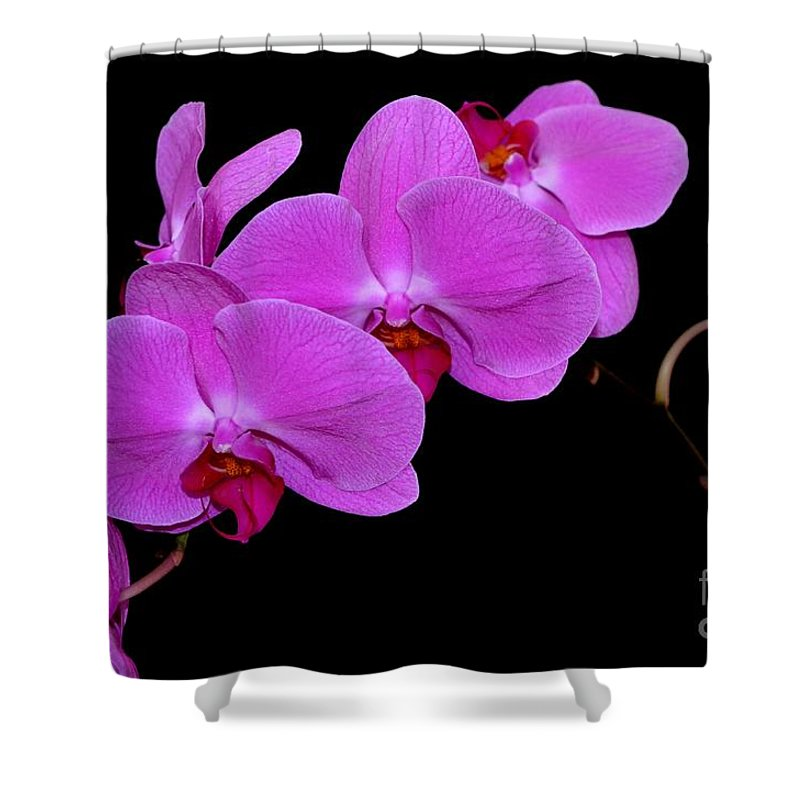 Orchid Shower Curtain featuring the photograph Green Field Sweetheart Orchid No 2 by Mary Deal