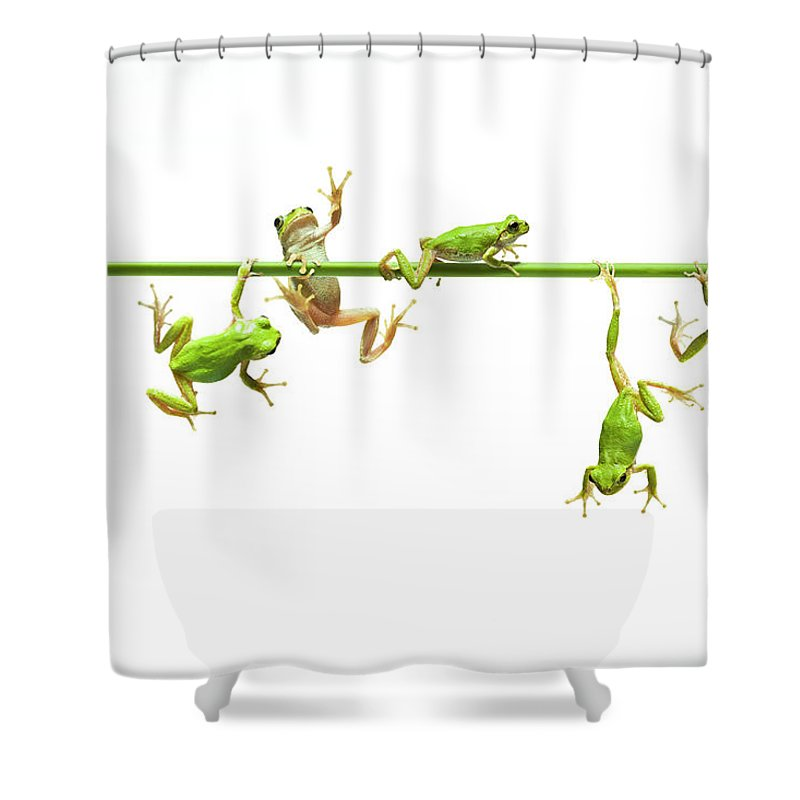 Hanging Shower Curtain featuring the photograph Green Flogs Each Other Freely On Stem by Yuji Sakai
