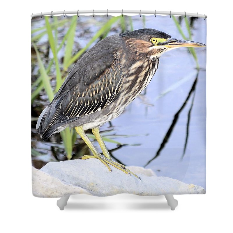 Green Shower Curtain featuring the photograph Green Heron by Bonfire Photography