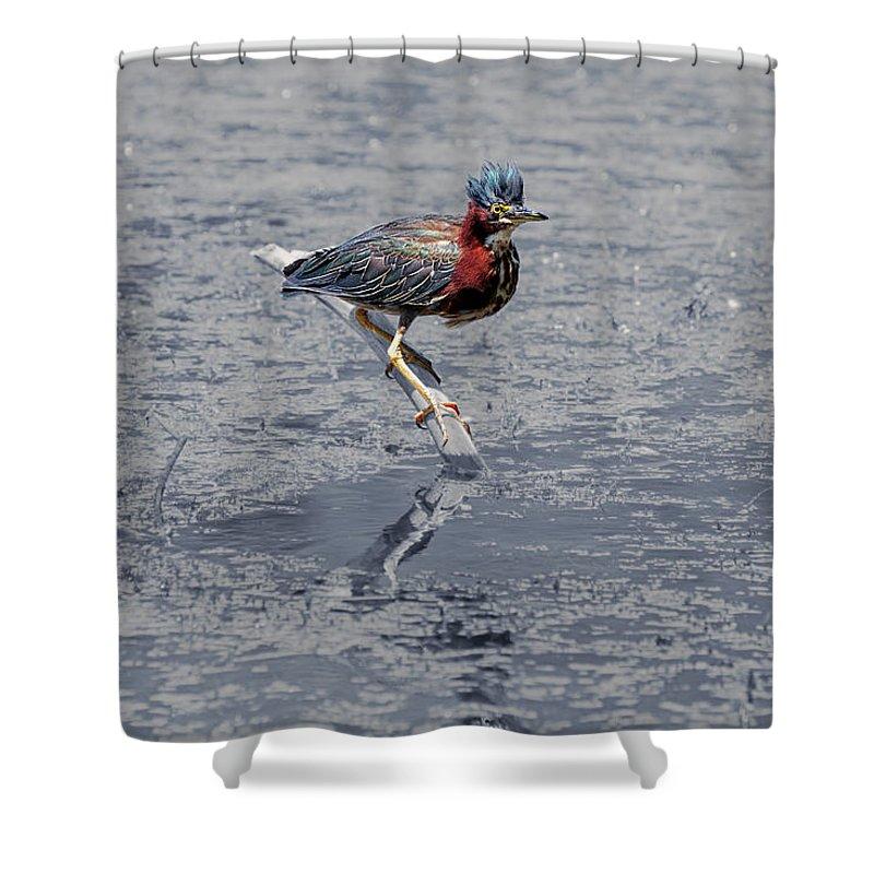 Green Heron Shower Curtain featuring the photograph Green Heron In Swannanoa North Carolina by John Haldane