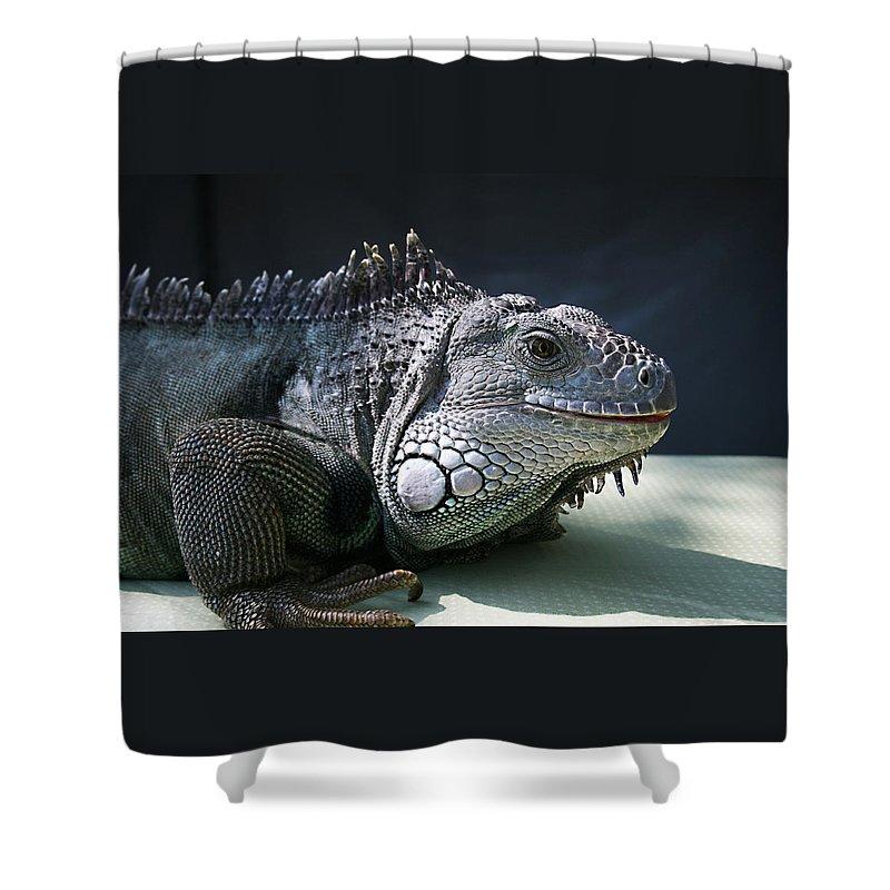 Green Iguana Shower Curtain featuring the photograph Green Iguana 1 by Ellen Henneke