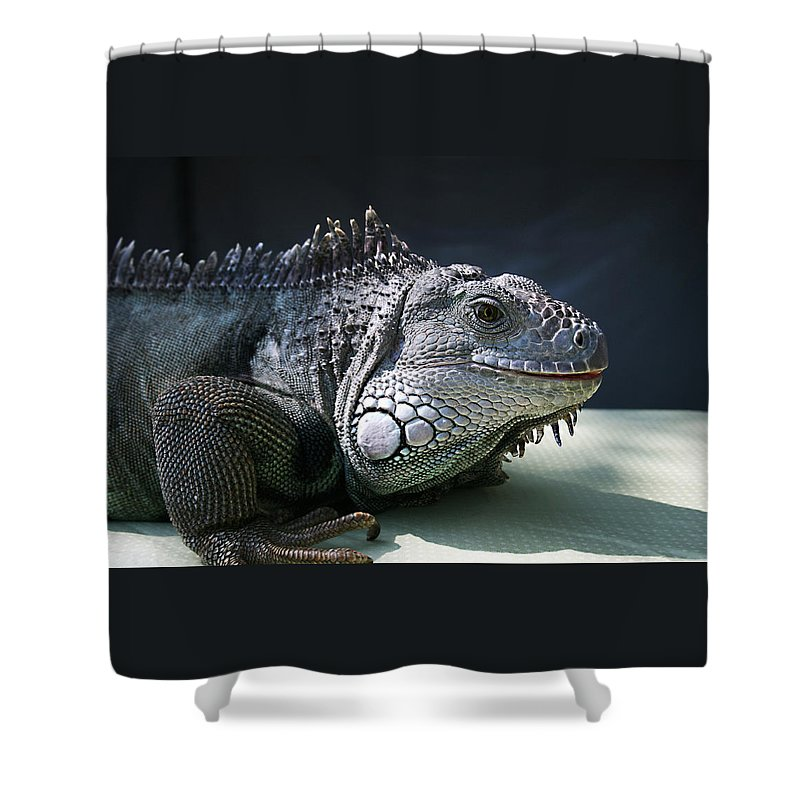 Green Iguana Shower Curtain featuring the photograph Green Iguana 1 by Ellen Henneke