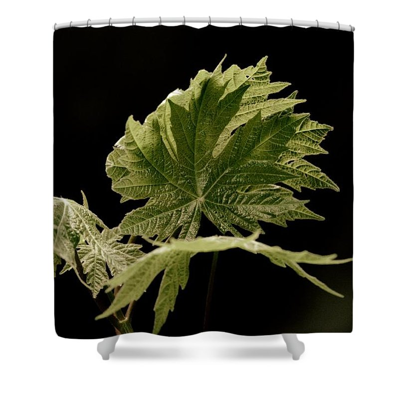 Leaves Shower Curtain featuring the photograph Green Leaves by Jeff Swan