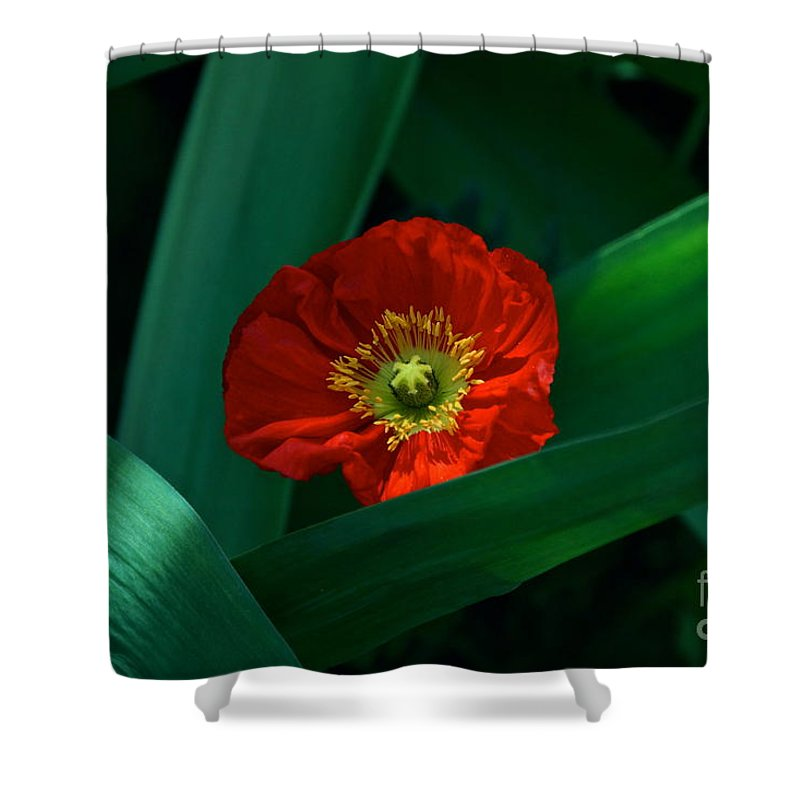 Red Poppy And Long Bright Green Leaves Shower Curtain featuring the photograph Green Loves Red Loves Green by Byron Varvarigos
