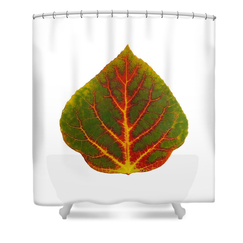 Aspen Leaf Shower Curtain featuring the digital art Green Red And Yellow Aspen Leaf 4 by Agustin Goba