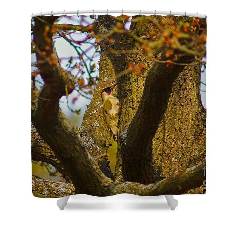 Green Woodpecker Shower Curtain featuring the photograph Green Woodpecker Richmond Park by Simon Kennedy