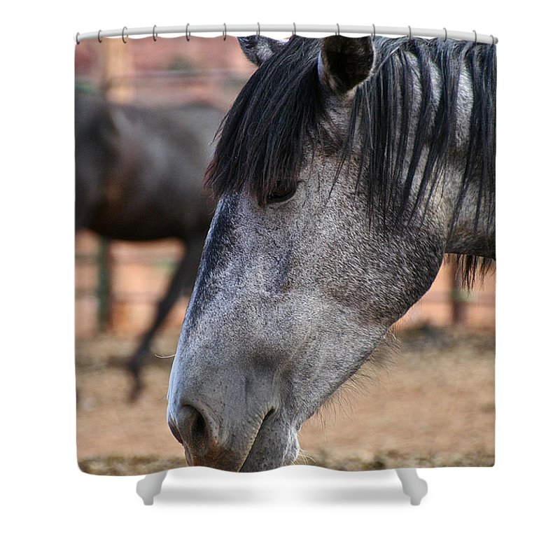 Mare Shower Curtain featuring the photograph Grey Mare by Susan Herber