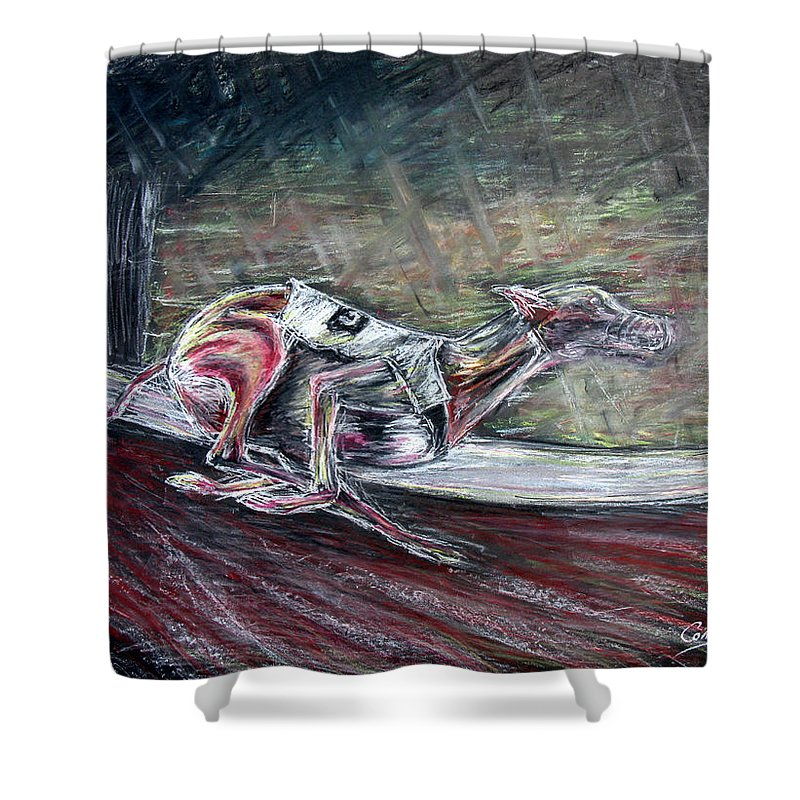Dog Shower Curtain featuring the drawing Greyhound Number Three by Tom Conway