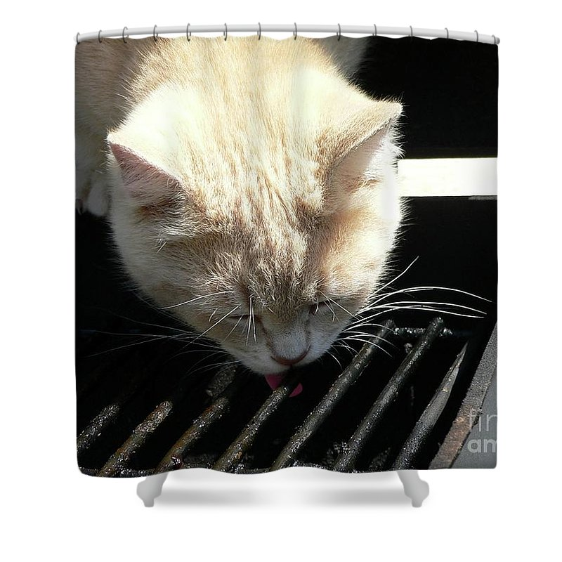 Pet Shower Curtain featuring the photograph Grill Grate Gato by Al Powell Photography USA