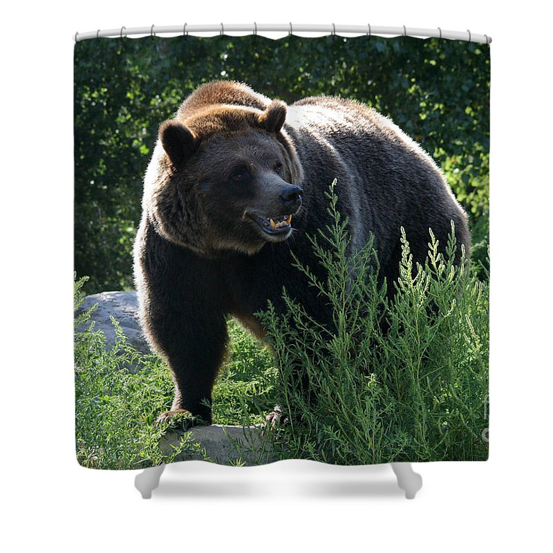Animal Shower Curtain featuring the photograph Grizzly-7759 by Gary Gingrich Galleries