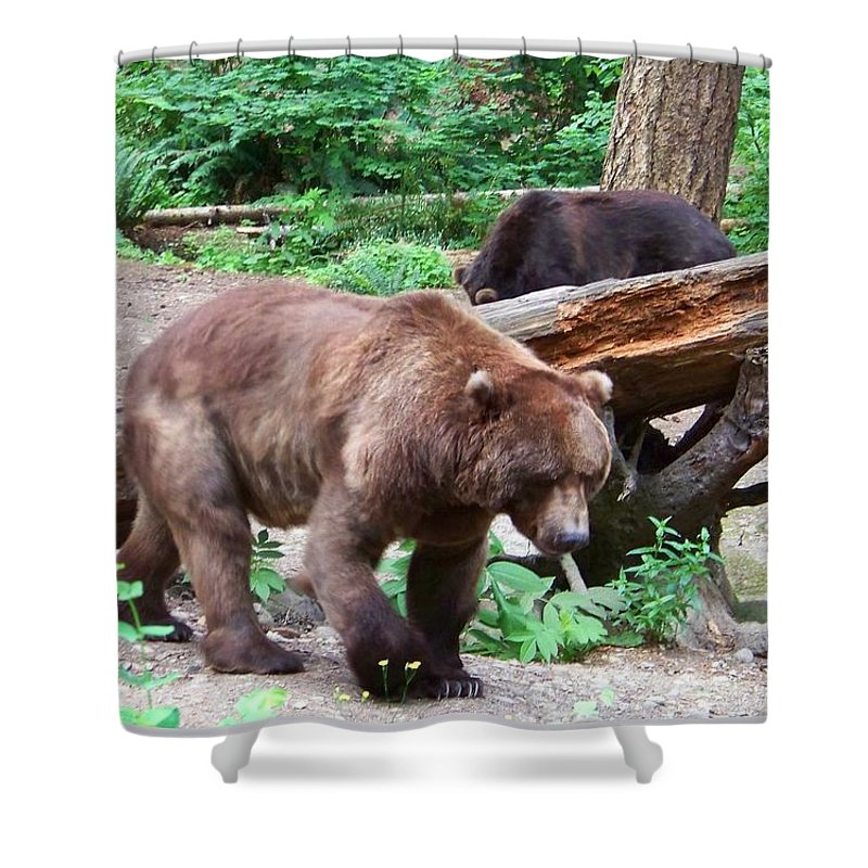 Bear Shower Curtain featuring the photograph Grizzly Bear by Charles Robinson