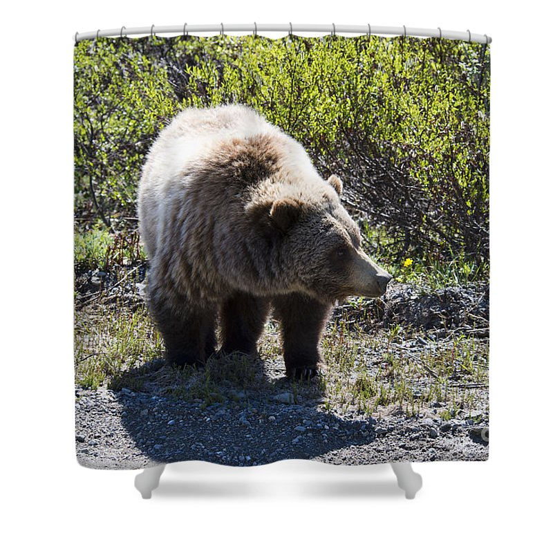 Grizzly Shower Curtain featuring the photograph Grizzly Bear by David Arment