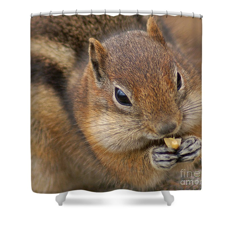 Ground Squirrel Shower Curtain featuring the photograph Ground Squirrel by Heather Coen