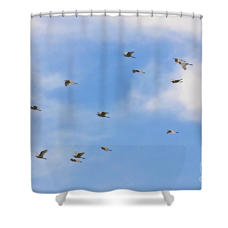 Casmerodius Albus Shower Curtain featuring the photograph Group Of Egrets Flying by Image World