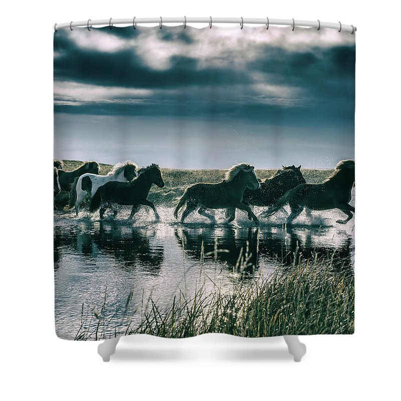 Horse Shower Curtain featuring the photograph Group Of Horses Crossing A River by Arctic-images