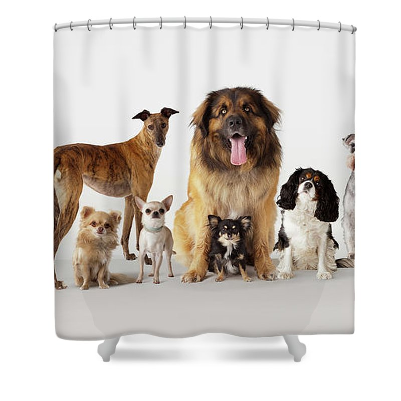 Pets Shower Curtain featuring the photograph Group Portrait Of Dogs by Compassionate Eye Foundation/david Leahy