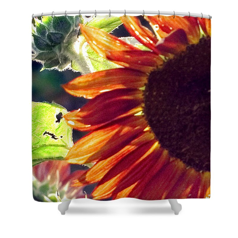 Sunflower Shower Curtain featuring the photograph Half Of A Sunflower by Madeline Ellis