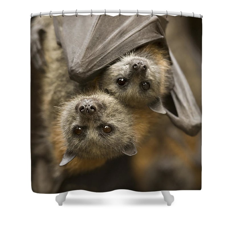 Bats Shower Curtain featuring the photograph Hang In There by Mike Dawson
