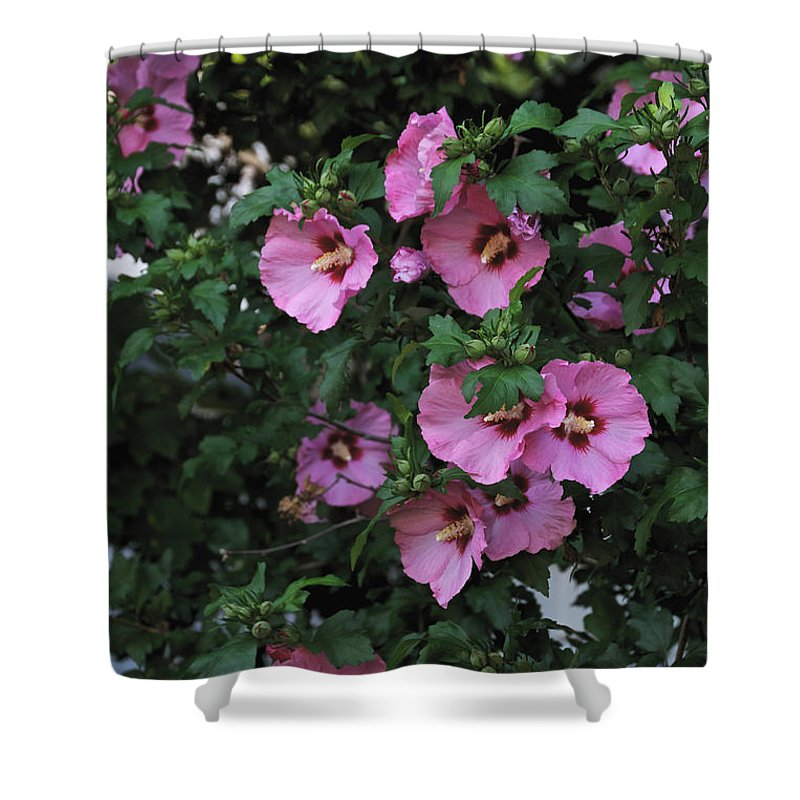 Pink Shower Curtain featuring the photograph Hanging With Friends by William Norton