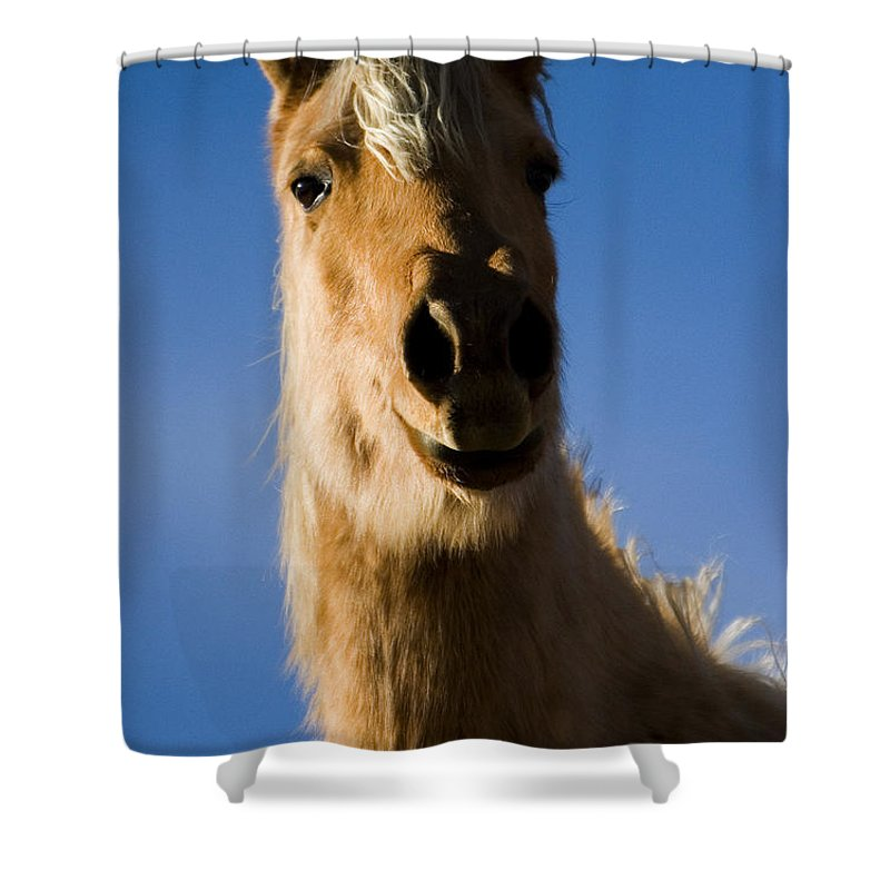 Equidae Equus Caballus Shower Curtain featuring the photograph Hank by J L Woody Wooden