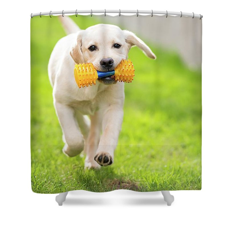Pets Shower Curtain featuring the photograph Happy Hour by Stefan Cioata