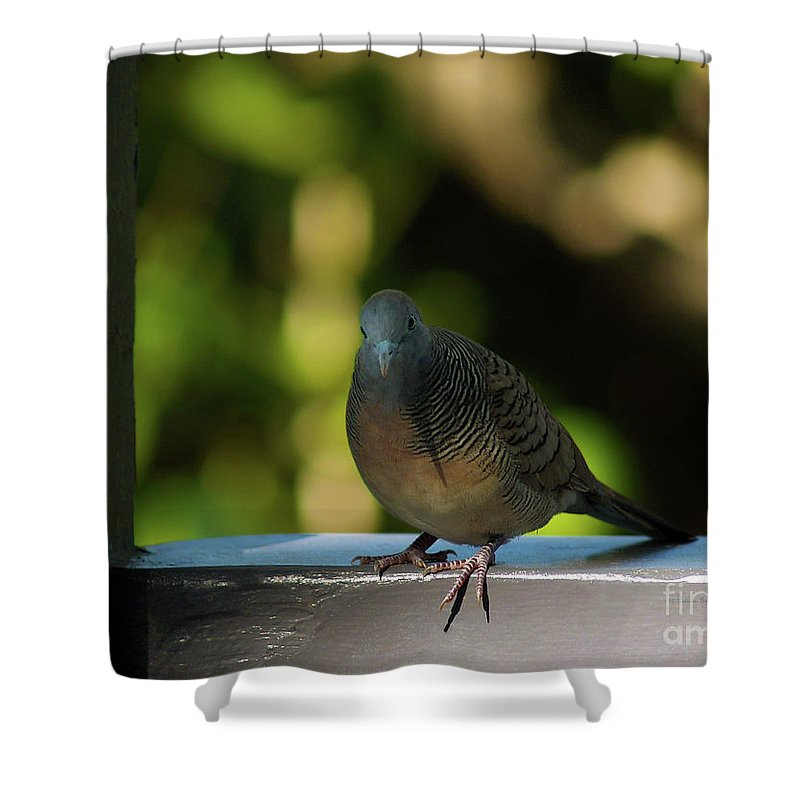 Dove Photography Shower Curtain featuring the photograph Hawaiian Mourning Dove by Patricia Griffin Brett