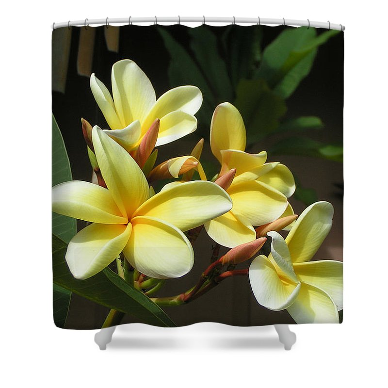 Flowers Shower Curtain featuring the photograph Hawaiian Plumeria by Patty Weeks