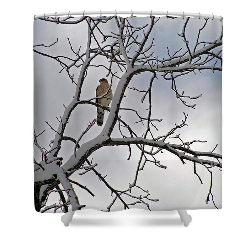 Winter Shower Curtain featuring the photograph Hawk In Winter by Karen Adams