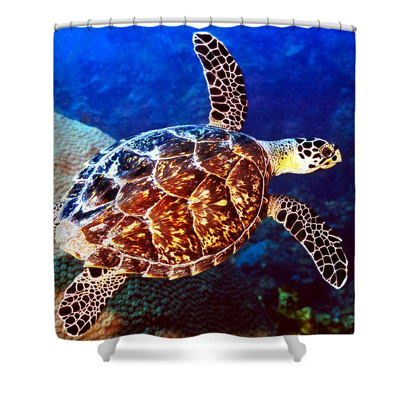 Swimming Sea Turtle Shower Curtain featuring the photograph Hawksbill by Jean Noren