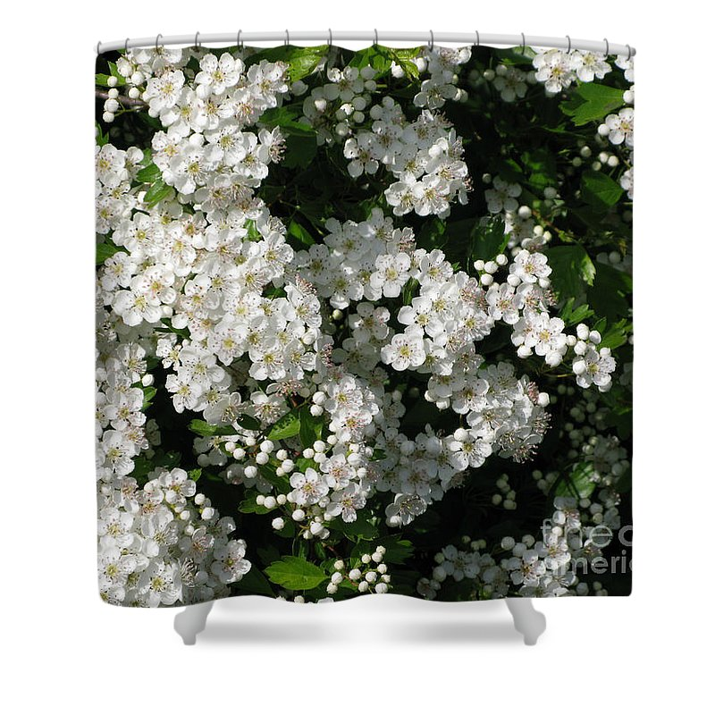 Hawthorn Shower Curtain featuring the photograph Hawthorn In Bloom by Ann Horn