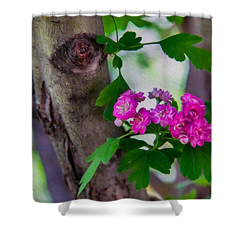 North Cascades Shower Curtain featuring the photograph Hawthorn Romance by Omaste Witkowski
