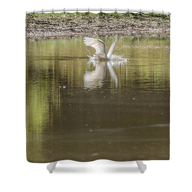 Bird Shower Curtain featuring the photograph Headless Snowy Egret Of Rum Creek by Donna Brown
