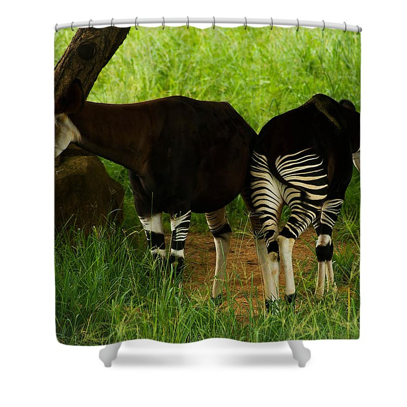 Okapi Shower Curtain featuring the photograph Heads And Tails by Tracey Beer