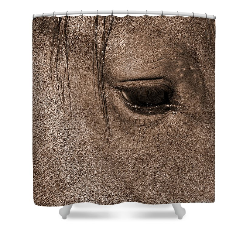 Equidae Equus Caballus Shower Curtain featuring the photograph Heart Of A Horse by J L Woody Wooden
