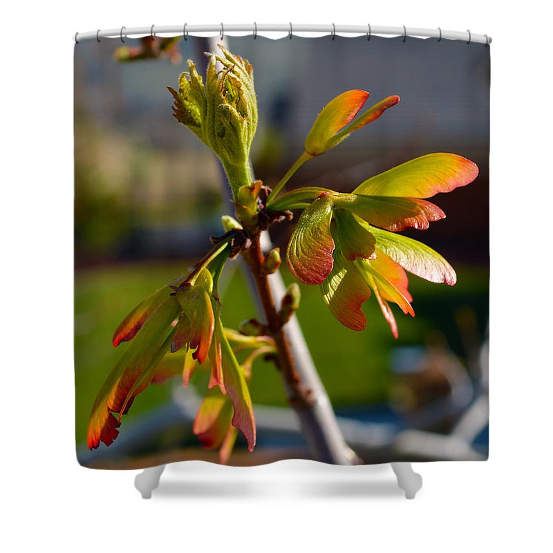 Seeds Shower Curtain featuring the photograph Helicopter Seeds 2 by Brent Dolliver