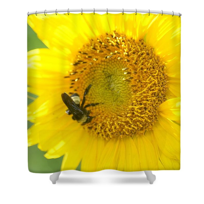 Hello Sunflower Shower Curtain featuring the photograph Hello Sunflower by Maria Urso