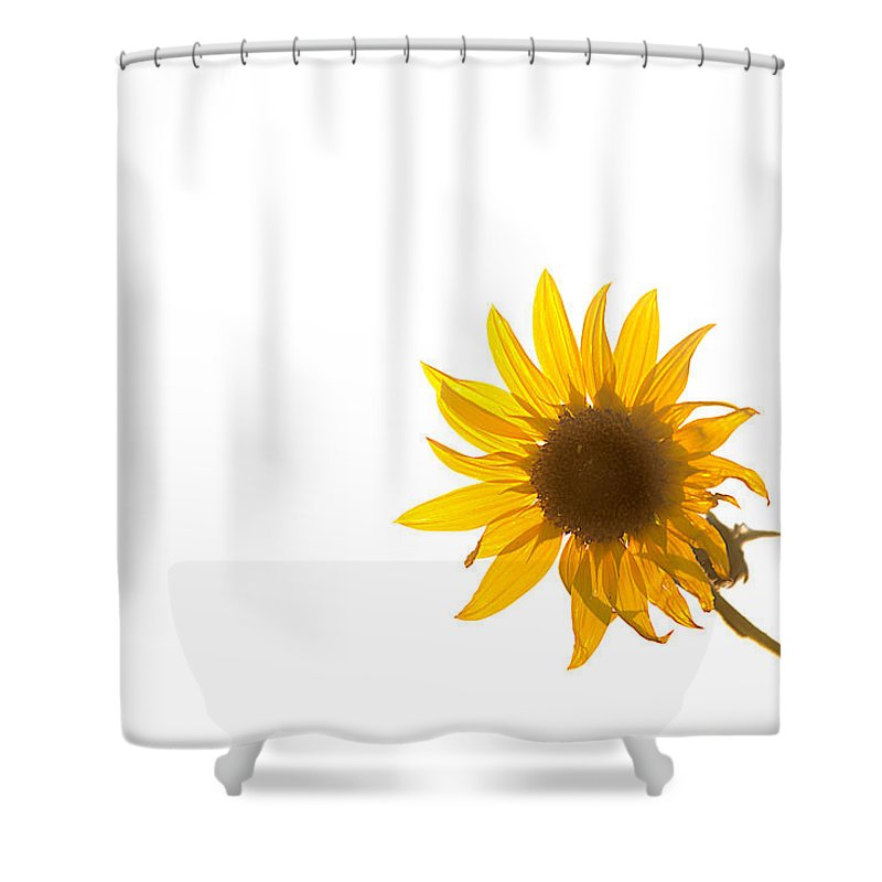 California Shower Curtain featuring the photograph Hello Yellow by Peter Tellone