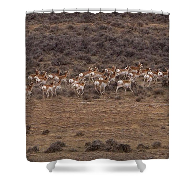 Antilocapra Americana Shower Curtain featuring the photograph Herd Of Antelope  #8552 by J L Woody Wooden