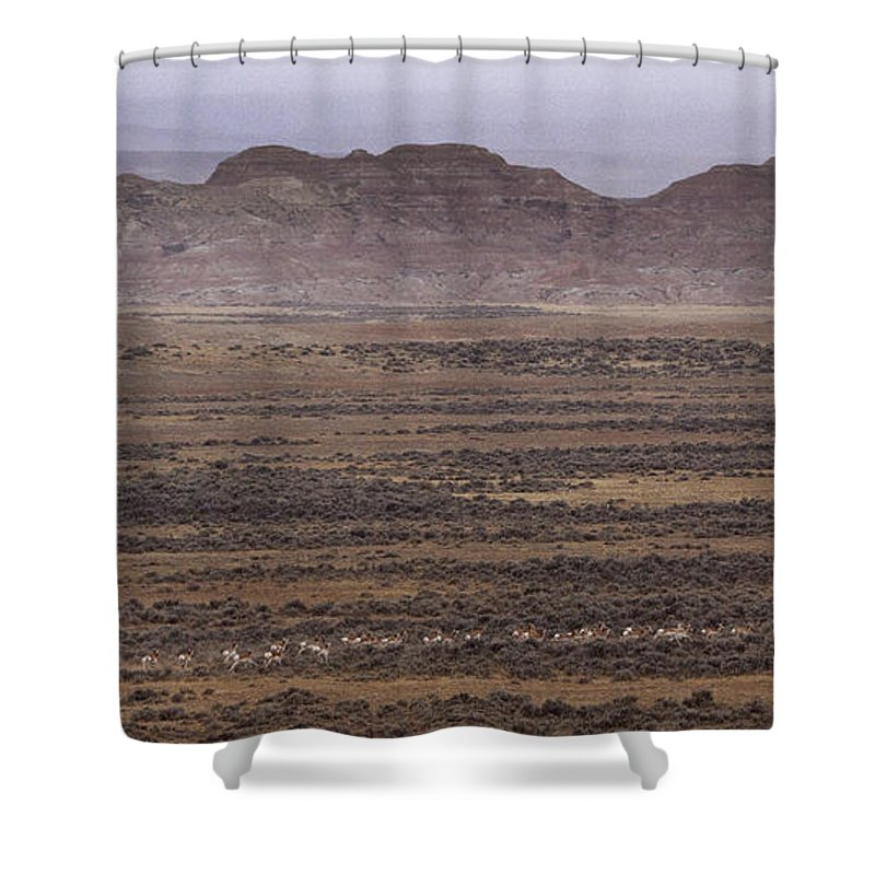 Antilocapra Americana Shower Curtain featuring the photograph Herd Of Antelope  #8573 by J L Woody Wooden