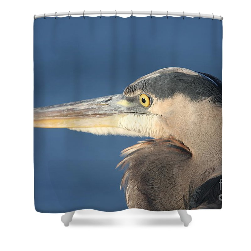 Heron Shower Curtain featuring the photograph Heron Close-up by Christiane Schulze Art And Photography