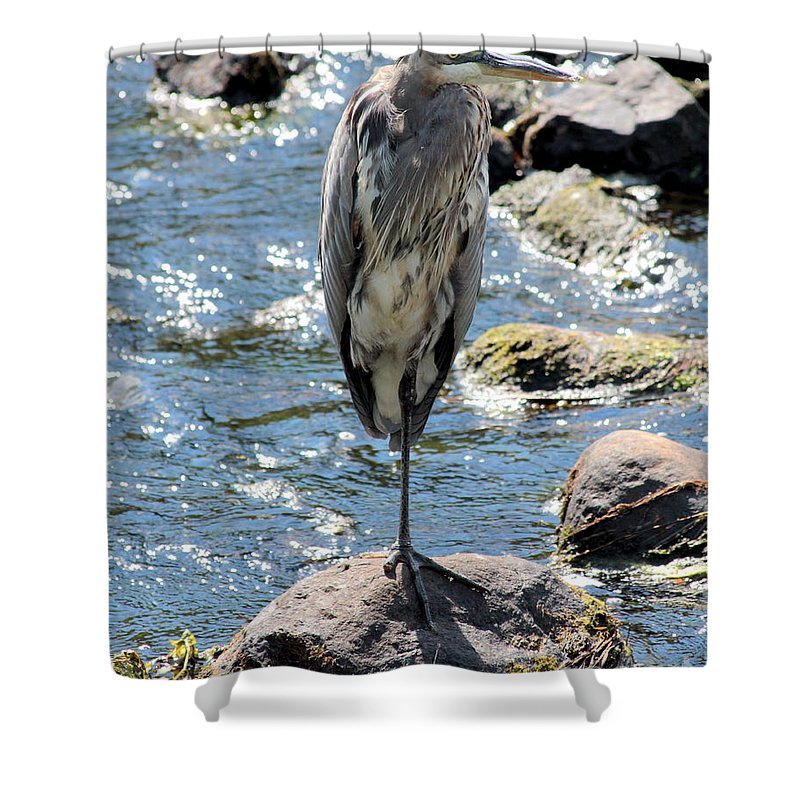 Blue Shower Curtain featuring the photograph Heron On One Leg by Kenny Glotfelty