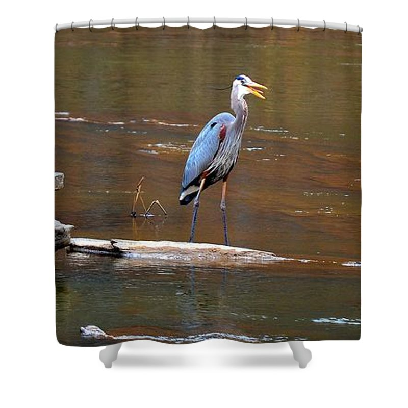 Heron Shower Curtain featuring the photograph Heron On The Creek by Tara Potts