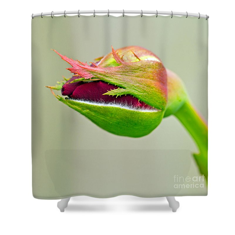 Art Prints Shower Curtain featuring the photograph Hi Bud by Dave Bosse