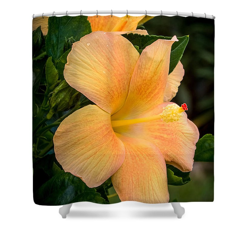 Hibiscus Shower Curtain featuring the photograph Hibiscus Flower by Zina Stromberg
