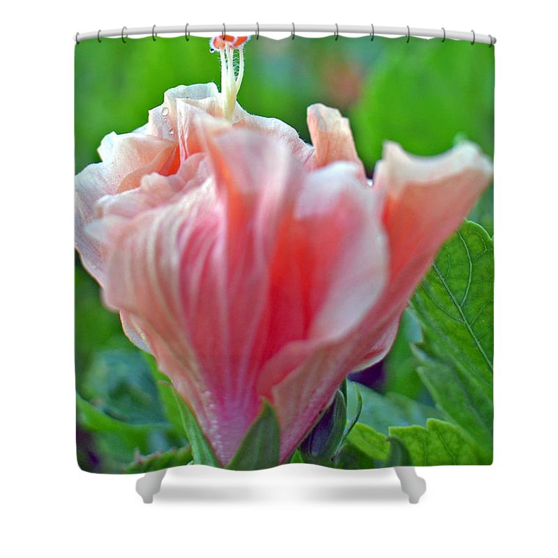 Flower Shower Curtain featuring the photograph Hibiscus by Paola Correa de Albury