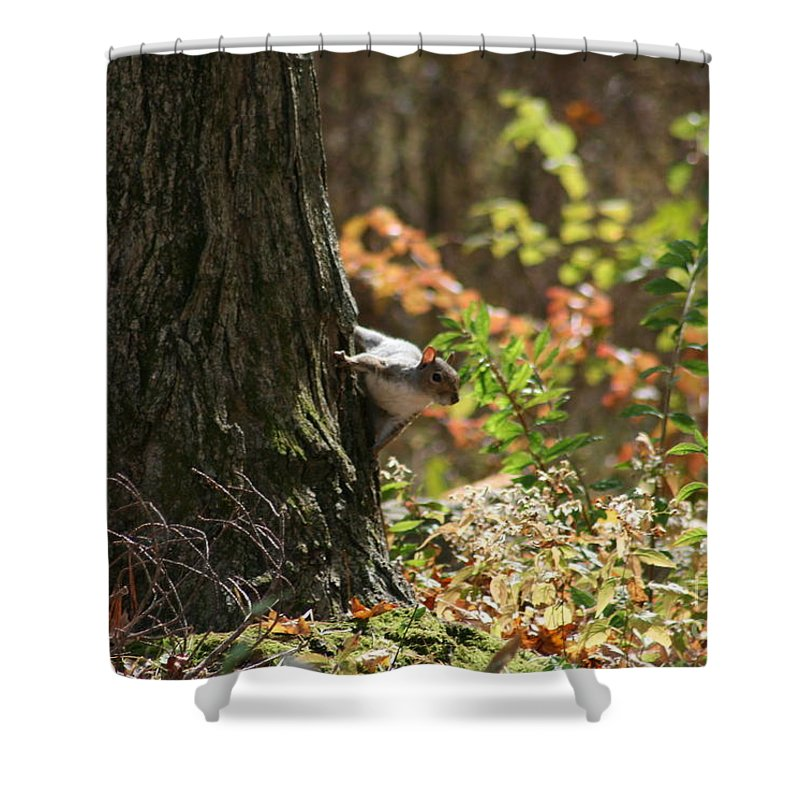 Squirrel Squirrels Shower Curtain featuring the photograph Hide And Seek by Neal Eslinger