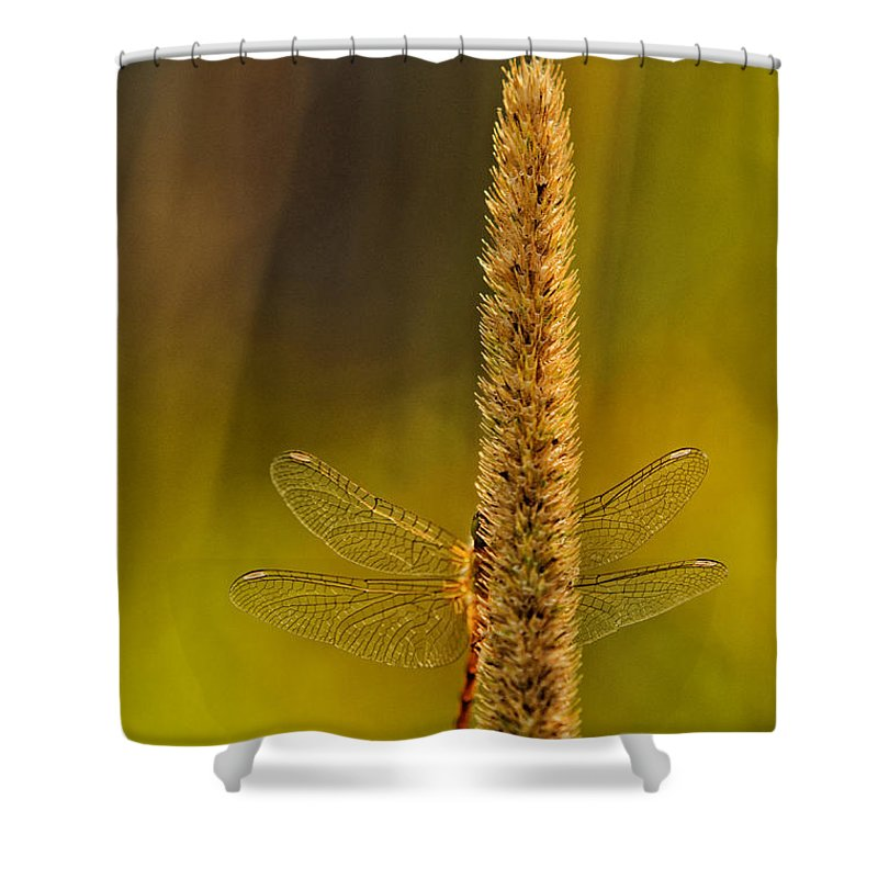 Dragonfly Shower Curtain featuring the photograph Hideout by Susan Capuano