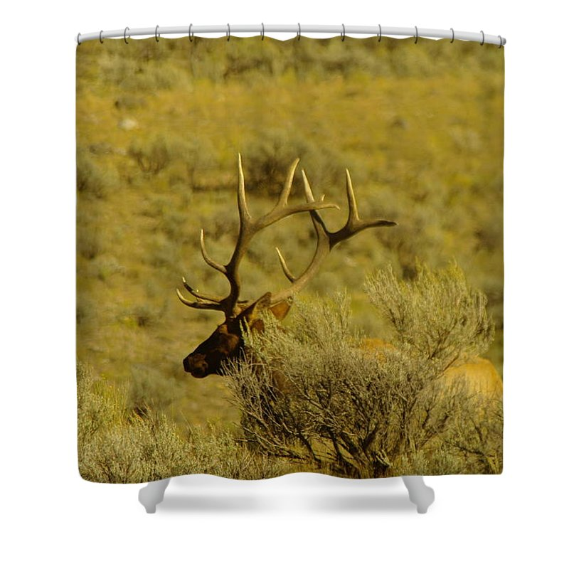 Elk Shower Curtain featuring the photograph Hiding Behind A Bush by Jeff Swan