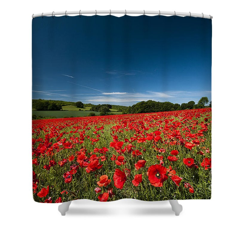 Agriculture Shower Curtain featuring the photograph High Summer by Anne Gilbert