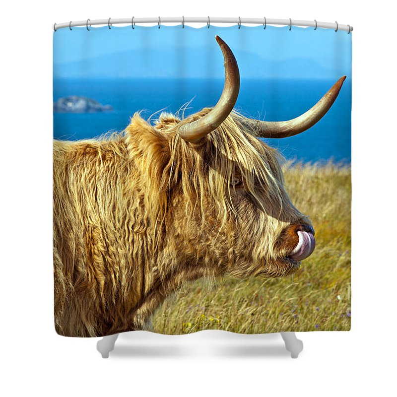 Highland Cattle Shower Curtain featuring the photograph Highland Beauty by Bel Menpes